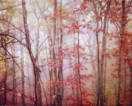 violetjulia_pinkfog.jpg