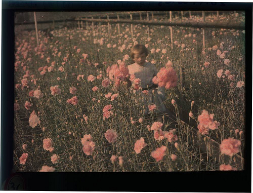 eastman_autochrome_carnations.jpg