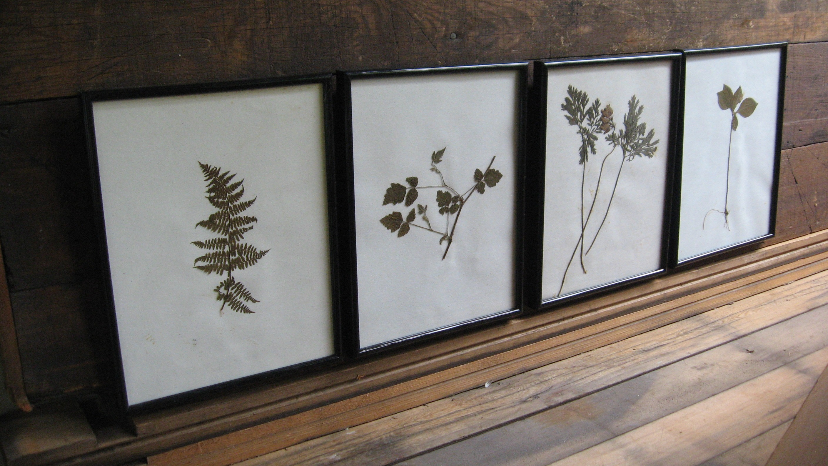 great findz, pressed plants, botany, framed, etsy, thelooksee