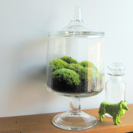 made by mavis, terrarium, art, plants, thelooksee, etsy