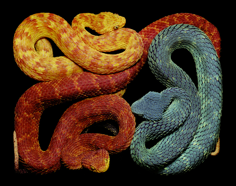 serpens, serpent, photos, reptile, snake, art, photo essay, book, thelooksee