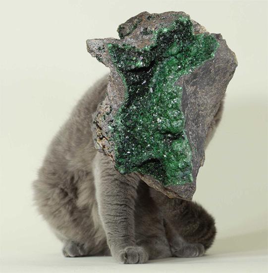 landon metz, cat rock, collage, art, geode, thelooksee