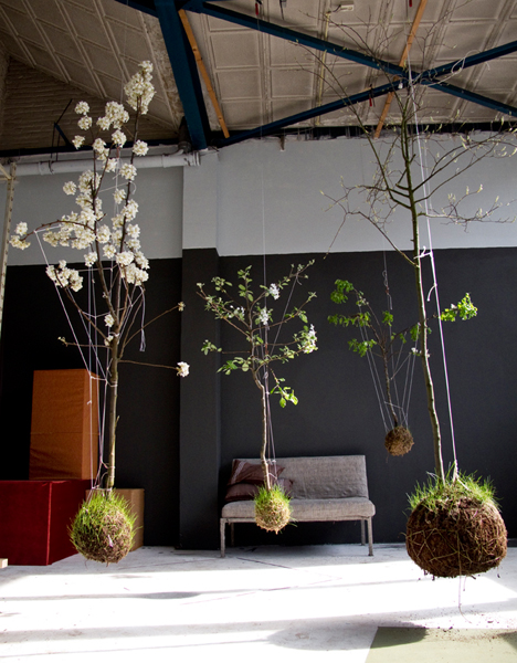 string garden, plants, suspended, botany, shop, thelooksee
