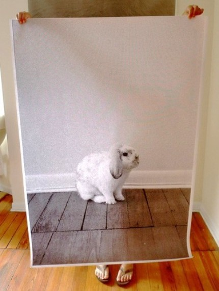 debbiecarlos_bunny.jpg