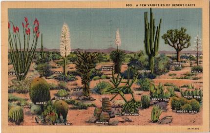 desert postcard, vintage plum, etsy, cactus, thelooksee