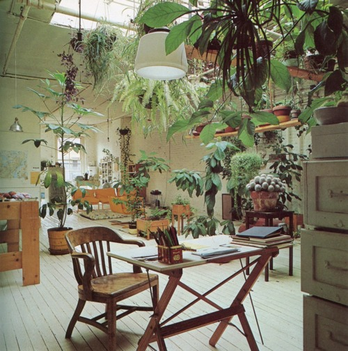 plants, indoors, vintage photo, work space, the look see