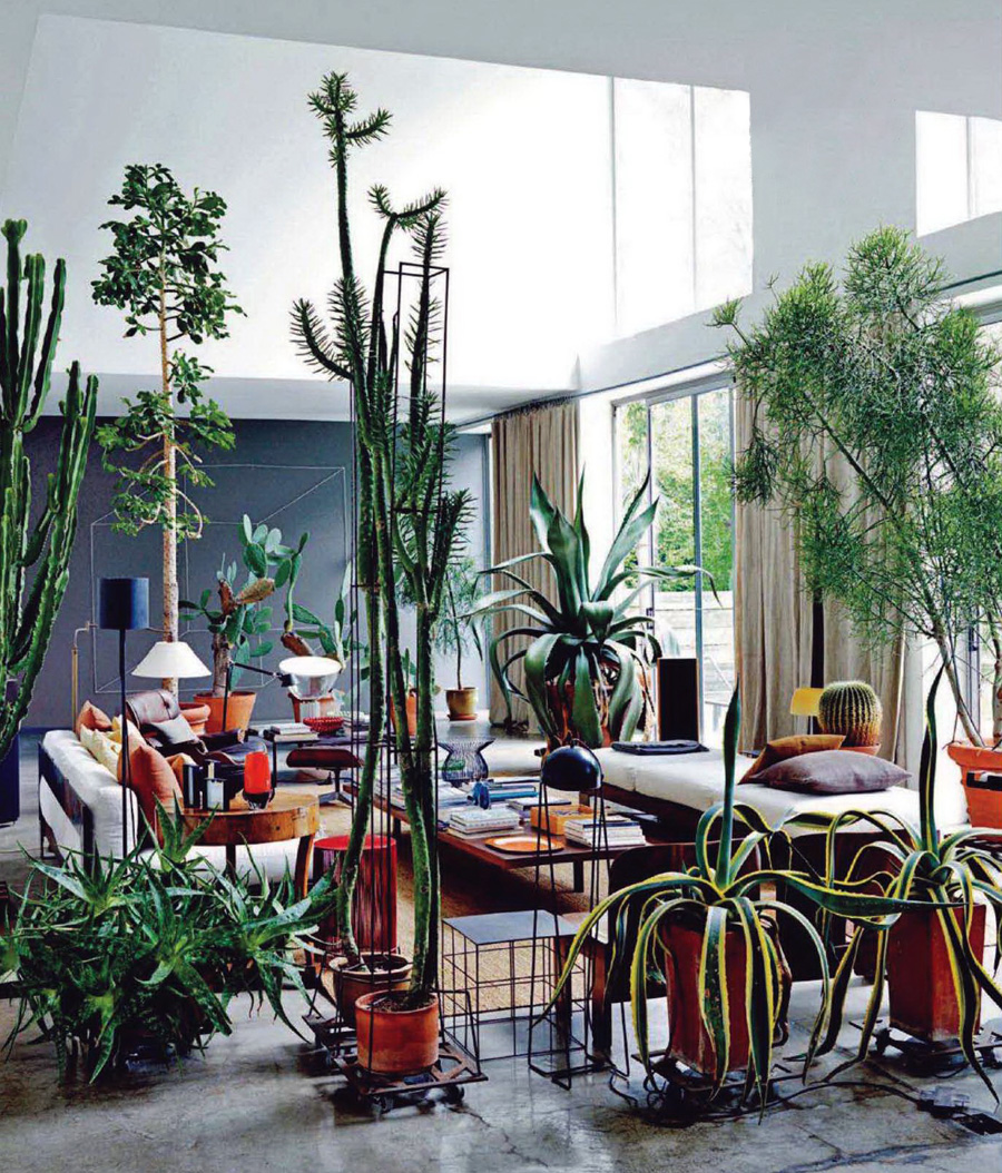 maurizio zucchi, elle korea, cacti, interior design, iiinspired, decor, the look see
