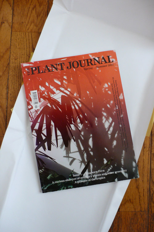 the plant journal, the look see, lucky's books, canada, plants, ferns, images ® christina beaulac