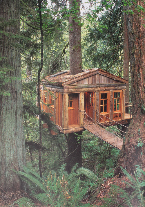 cabin, woods, tree house, vintage, photo