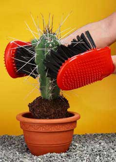innovative, cactus, tools, spines, transport, uk, the look see